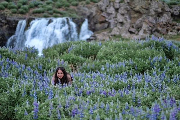 flower_Garden_iceland