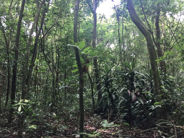 Vietnam_Forest